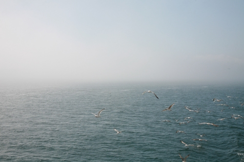 Bosphorus, Birds, Fog