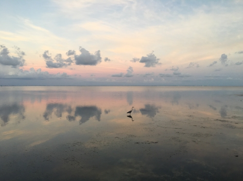 A lone egret steps carefully at sunset, the pink glow and clouds reflected in the still water.